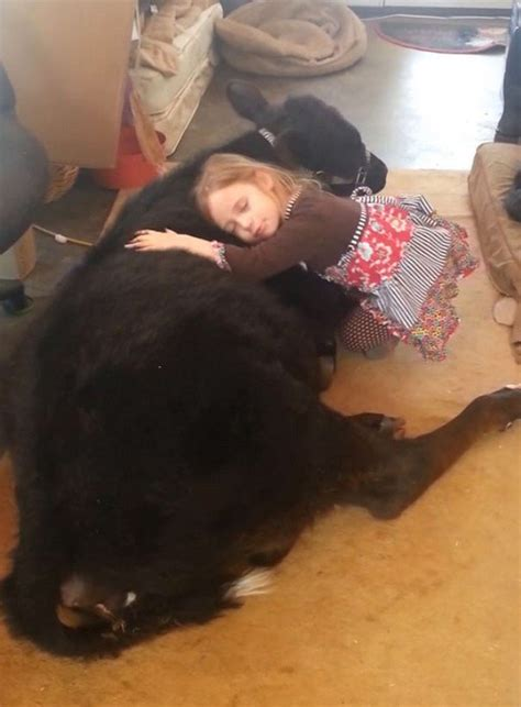 See 5-Year-Old Breanna Sneak A Cuddly Baby Cow Into Her Home