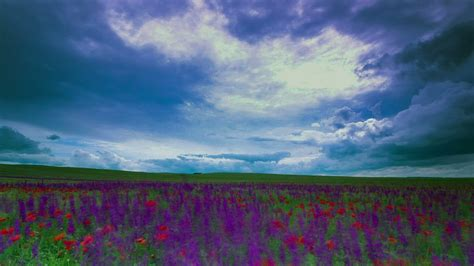 Rain clouds coming in over a meadow - Free Stock Video