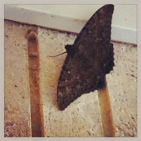 Treasures: Large Moth Could Mean A Lottery Win - Blogs