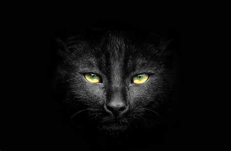 45+ Best Enchanting Black Cat Photos And Images - 500px